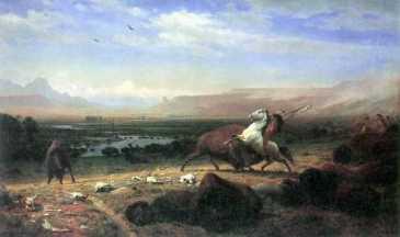 Bierstadt-Büffel